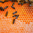 Worker bees — Foto de Stock