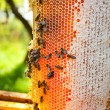 Worker bees — Stock Photo