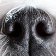 Dog nose close-up — Photo
