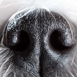 Dog nose close-up — Stock Photo