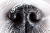 Dog nose close-up — Stockfoto