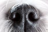 Hond neus close-up — Stockfoto