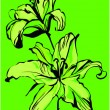 Two lilies on a green background — Stock vektor