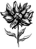 花、茎と葉が分離 — ストックベクタ