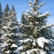 Tree a fir-tree is in-field covered by white snow - Stock Photo