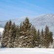 Fir-trees at the foot of mountains Carpathians — Stock Photo