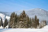 Karpatlar dağları'nın eteklerinde çam ağaçlarının — Stok fotoğraf