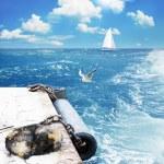 Marine moorage and dog — Stock Photo