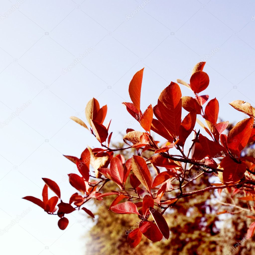 Autumn red leaves with the sky  — Stock Photo #9017386