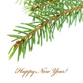 Spruce twig — Stock Photo