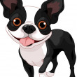 Stock Vector: Boston Terrier