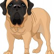 English Mastiff - Stock Vector