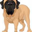 English Mastiff - Stok Vektör
