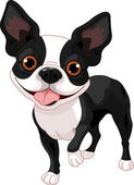 Boston Terrier — Stock Vector