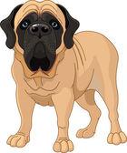English Mastiff — Stock Vector