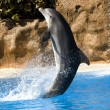 Dolphin dancing in water — Stock Photo