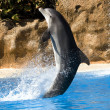 Stock Photo: Dolphin dancing in water