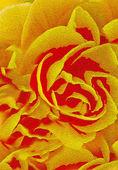 Soyut çiçek resmi — Stok fotoğraf