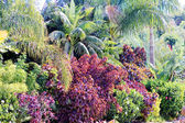 Tropical plants in Siam Park — Stock Photo