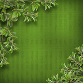 Deciduous tree branch on the background of abstract green wall — Stock Photo