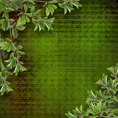 Deciduous tree branch on the background of abstract green wall — Stockfoto