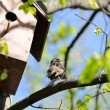 Starling Sitting on Tree near Birdhouse - Stock Photo