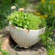 Old Cracked Pot with Flowers in the Garden — Stock Photo
