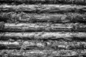 Monochrome Wall of Wood Logs Chinked with Moss — Stock Photo