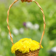 Hand Holding Basket with Yellow Dandelion Flowers — Stock Photo #10673753