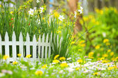 Flower Bed with Narcissuses and Decorative White Fence — Stock Photo