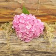 Pink Hydrangea Flowers on Wooden Wall with Moss — Stock Photo #8383289