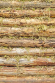 Wall of Wood Logs Chinked with Moss — Stock Photo