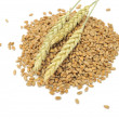 Wheat Grains with Ears — Stock Photo