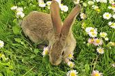 Cute Rabbit in the Garden in Summer — Stock Photo