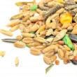 Foto Stock: Rodent Food Mix of Grains and Seeds