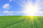 Sun Shining in Blue Sky over Green Field — Stock Photo