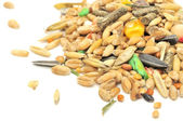 Rodent Food Mix of Grains and Seeds — Stock Photo
