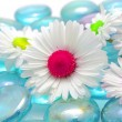 Stock Photo: Beautiful Chamomiles with Colorful Middles on Blue Glass Stones