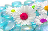 Beautiful Chamomiles with Colorful Middles on Blue Glass Stones — Stock Photo