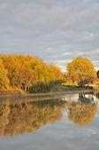 Beautiful Autumn Scenery – Lake and Yellow Trees — Foto Stock