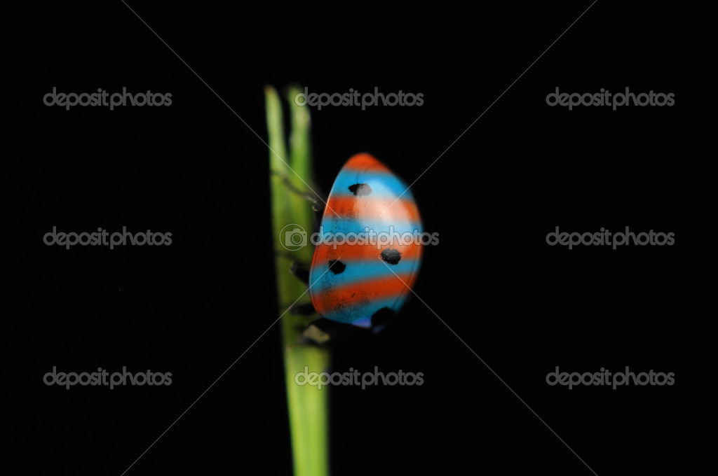A bizarre striped ladybird (ladybug) on a grass against a black background — Stock Photo #8683958