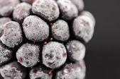 Close-up blackberry congelado — Fotografia Stock