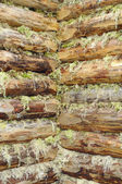 Corner of Wood Log House Chinked with Moss — Stock Photo