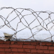 Stock Photo: Barbed Wire on Brick Fence