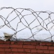 Barbed Wire on Brick Fence - Stock Photo