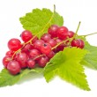 Red Currants with Green Leaves — Stock Photo