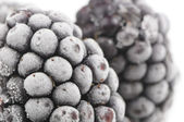 Frozen Blackberries Macro — Stock Photo
