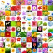 Big Collection of Flowers (Set of 100 Images) — Stock Photo #9872898