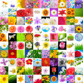 Big Collection of Flowers (Set of 100 Images) — Stock Photo