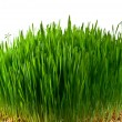 Wheat grass — Stock Photo #9102279